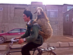 Trips in your 20s - Backpacking Sheep