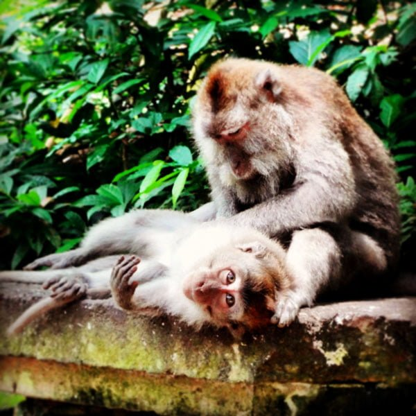 Of Pork and Monkeys – Visiting Ubud in Bali
