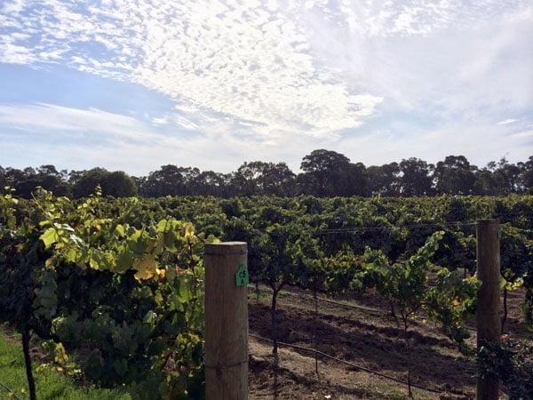 Perth Margaret River Coward and Black Vineyard
