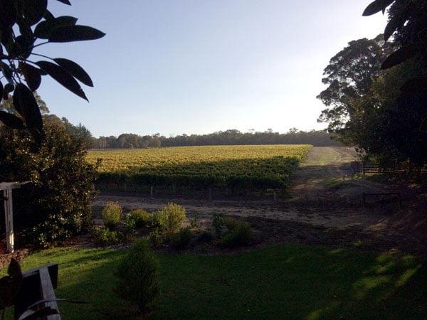 Perth Margaret River Amon Ra Treehouse View