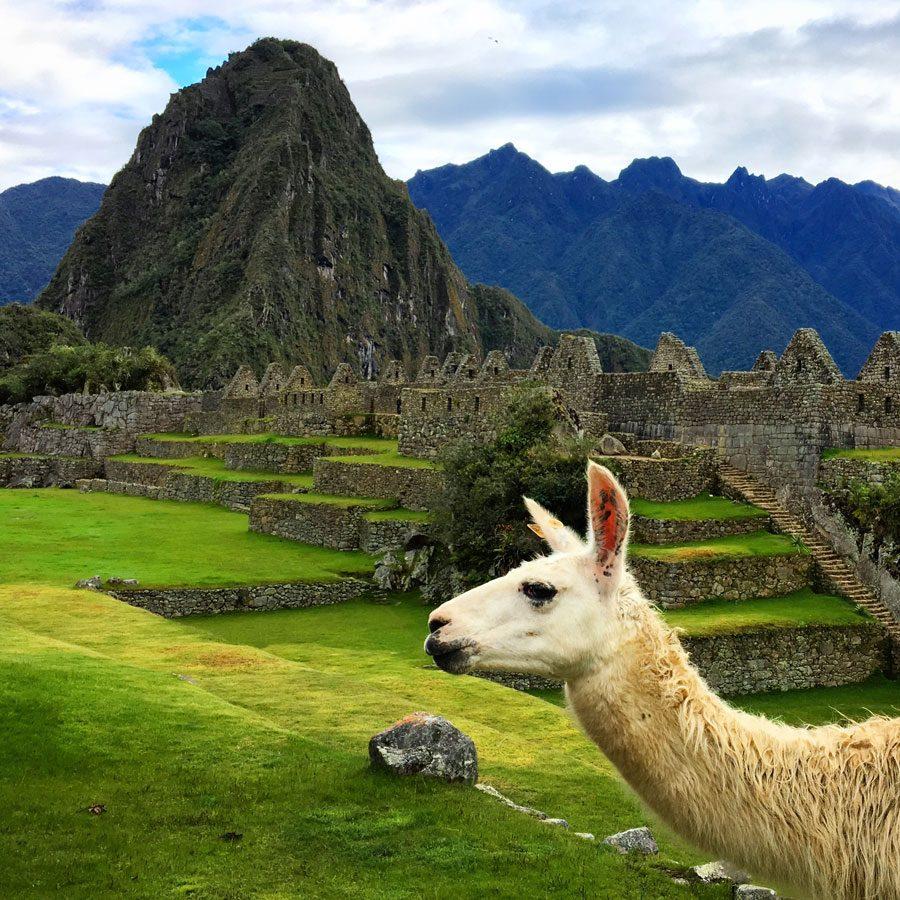 Peru Machu Picchu Llama Photobomb