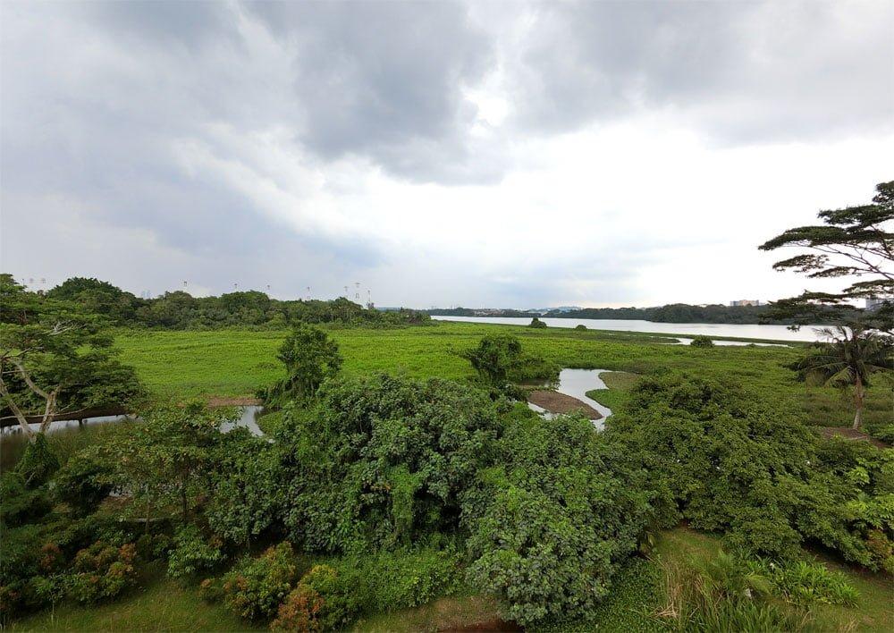 Kranji Marshes View Marshland