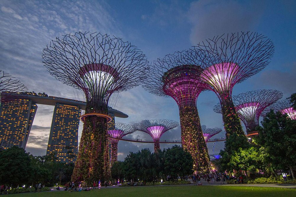 Singapore Supertree Grove Night MaksymKozlenko